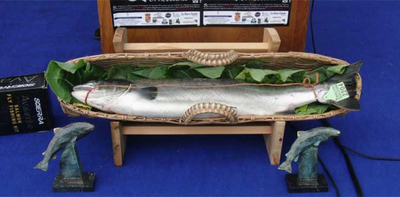 ¡Campanu a la vista! tradición en la pesca del salmón