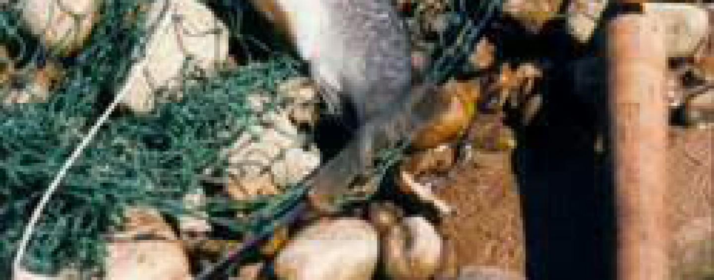La pesca del reo es para el verano