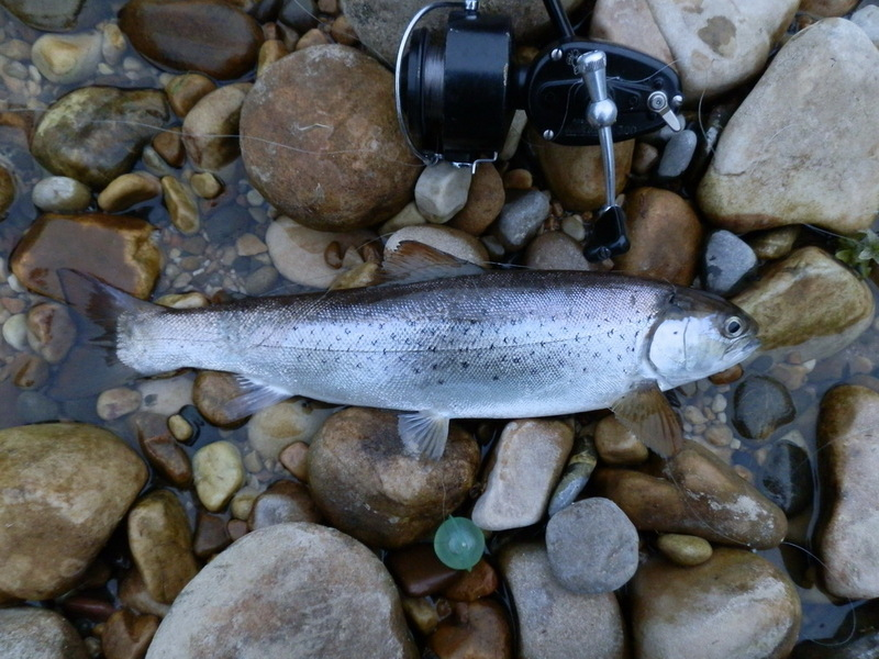 Pesca del reo