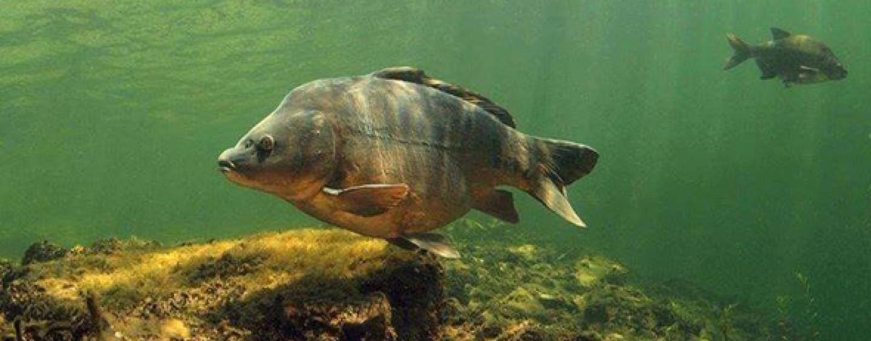 4 consejos para pescar carpas en los días más fríos de invierno