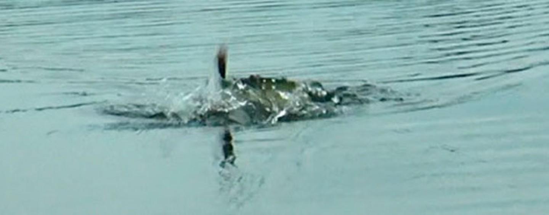 5 razones para aventurarse a pescar con señuelos de superficie