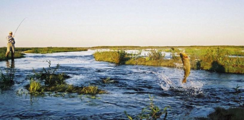 PeZcaleros pescando en Esteros del Iberá, Argentina