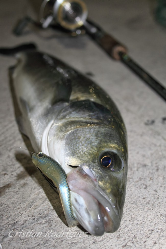 pescar lubinas a lance ultraligero
