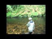 Vídeo de pesca de la semana: tentando truchas a mosca