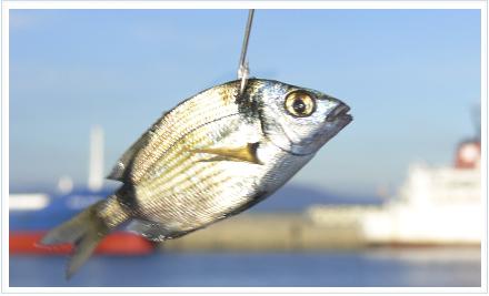 Spinning con artificiales o pesca con pez vivo revista for Estanques artificiales o prefabricados