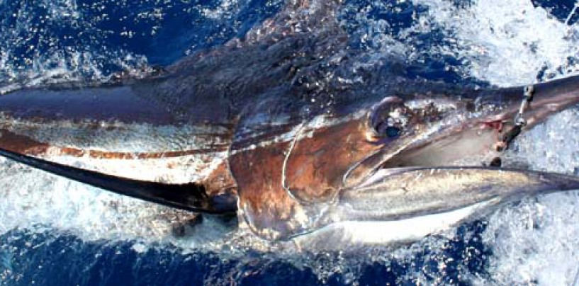 PeZcaleros Viajeros de pesca en Cabo Verde