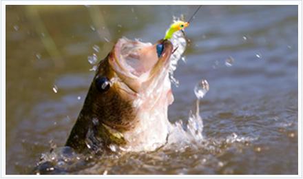 Pez atacando a señuelos de pesca