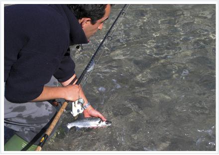 Carlos Prieto devolviendo al agua una lubina