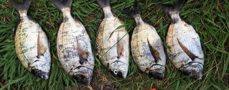 La adición de la pesca del sargo con corcho, emoción a raudales