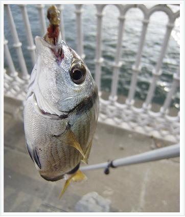 La pesca del sargos