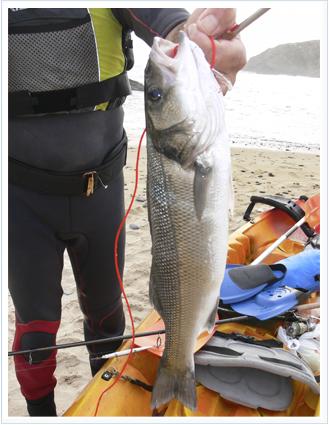 Pesca de la lubina con kayak de pesca