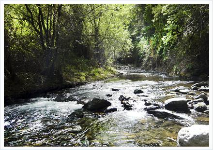 Coto del río Genil en Granada