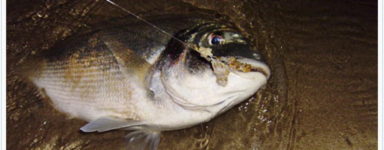 ¿Has probado la pesca selectiva para doradas y lubinas?