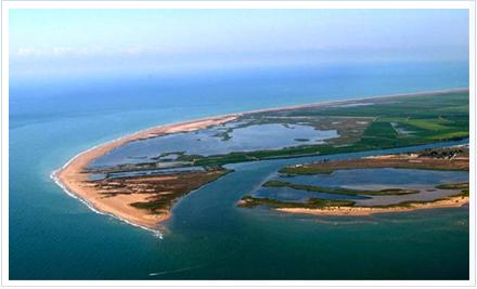 Delta del Ebro. Foto de: http://www.ornis.cat/deltebre.php