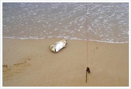 pescar doradas a surfcasting