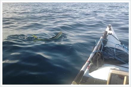 Pesca llampugas de kayak de pesca al brumeo