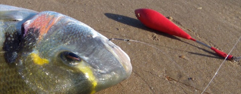 6 lugares en donde pescar doradas a surfcasting