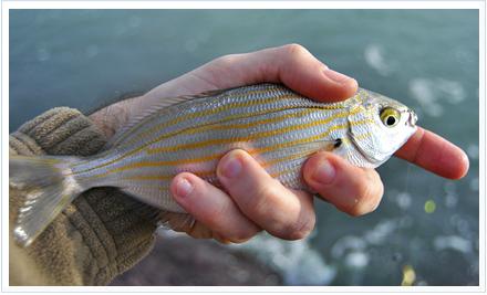 Pesca de Salpas