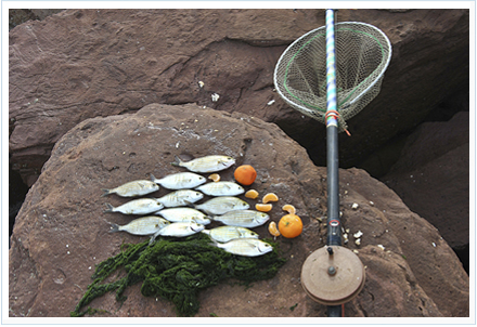 Pesca de la salpa a corcheo
