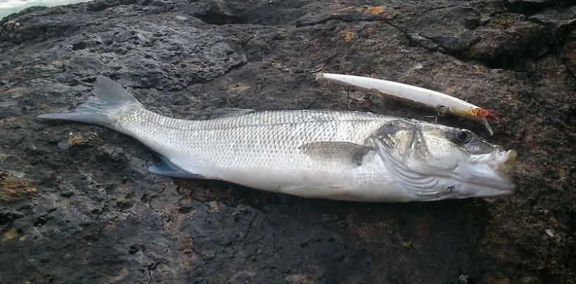Como mejorar nuestra jornada de pesca de depredadores