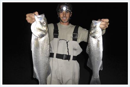 pesca de lubinas surfcasting nocturno