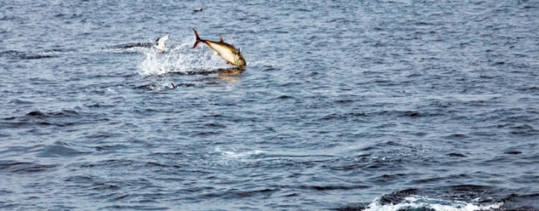 Pescar atunes en el Cantábrico ¿sueños rotos?