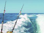 Pezcador al día, principales noticias de pesca (diciembre 2016, 3)