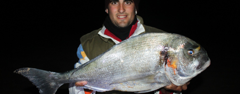 5 cebos para pescar doradas grandes