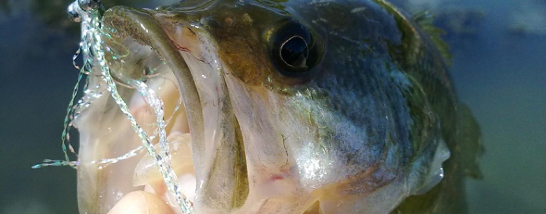 5 consejos para pescar un black bass en verano