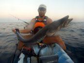 Bestias del Mediterráneo: pesca de barracudas XXL desde kayak
