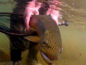 Vídeo de pesca la semana: amor por la pesca a mosca