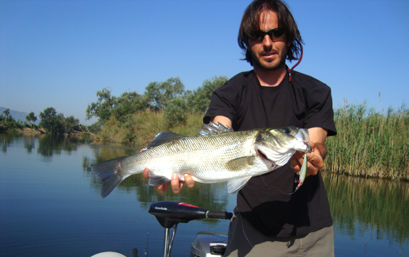 Toni Martínez con una lubina pescada en el río Ebro con un minnow. Técnicas de pesca.