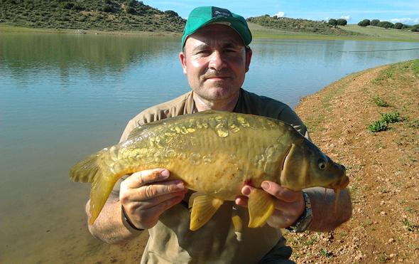 Carpa pescada por Josan Illescas. Pescar carpas a fondo.