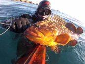 Vídeo de pesca engañando meros en la Costa Brava