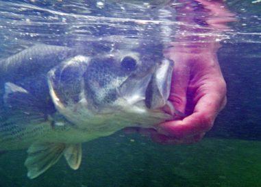 Buscando los mejores rincones para la pesca del Black Bass en España