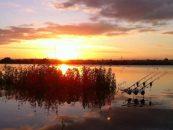 6 artículos para pescar carpas en primavera