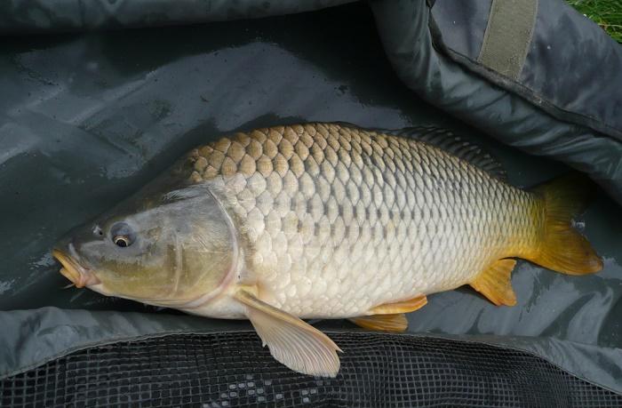 pesca del carpon