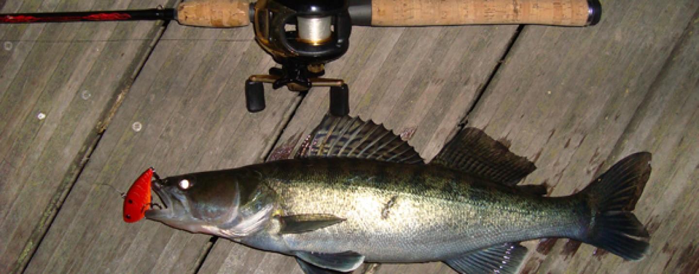 5 consejos básicos pescar luciopercas por primera vez