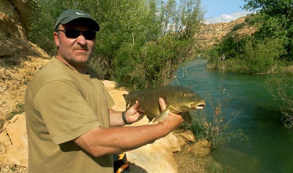 Barbo capturado por Josan Illescas en el río Guadiela.
