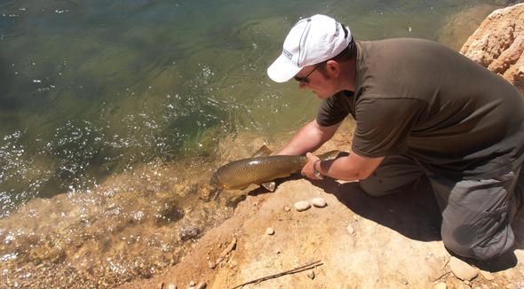 Captura y suelta de un barbo en el río Guadiela