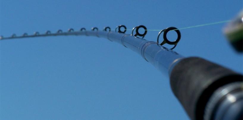 Brico-pesca: reparación de las anillas de la caña