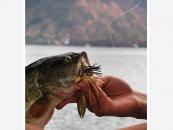 Video de pesca del black bass con vinilos por Juan de Dios Bonilla