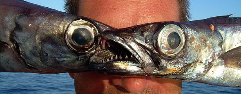Vivir de la pesca creando un blog y cobrar por publicidad