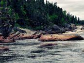 Vídeo de pesca: salmones del mundo