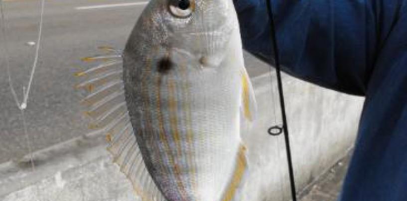 Pesca con Sabiki: buscando lo pequeño