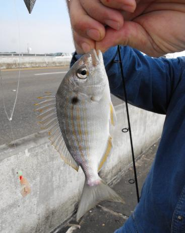 Pesca con sabiki. foto de http://fishingdestinguide.com/BAIT.html