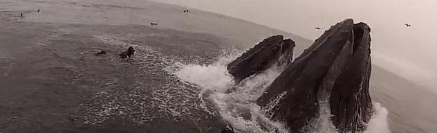 seguridad en la pesca: dos buceadores están a punto de ser engullidos por un par de ballenas