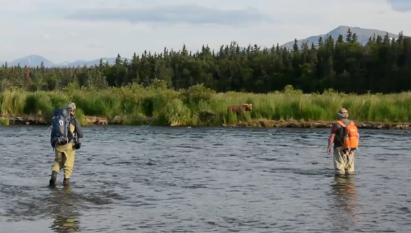 pescando entre osos