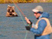 El vídeo de la semana: pescando entre osos