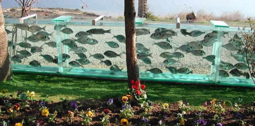 Lubinas, anguilas y besugos… en un muro-acuario